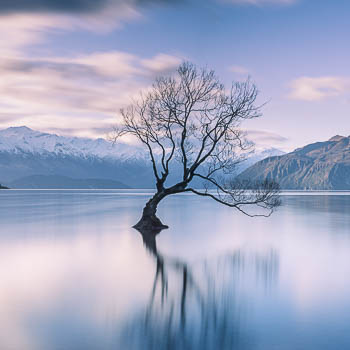 The Wanaka Tree in Wanaka