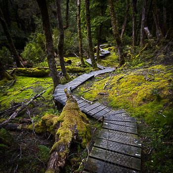 Canyon Walk, Cradle Mountain National Park