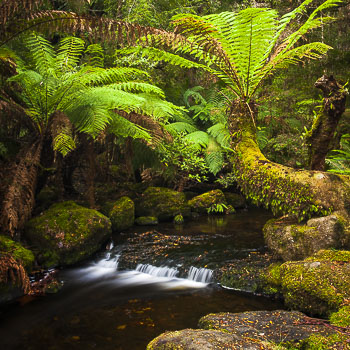 Mount Field National Park, Photo Tour